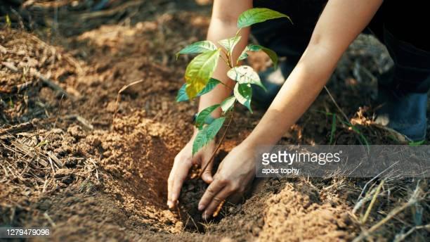 plant for the earth - boom stockfoto's en -beelden