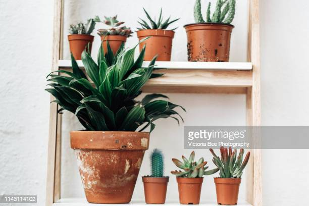 plant garden in flower pots - flower pot stock pictures, royalty-free photos & images