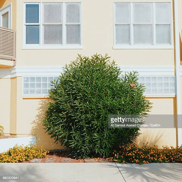 Plant Growing By Building