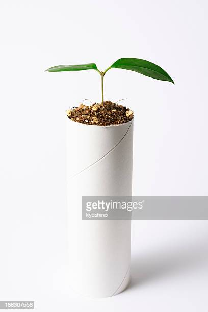 plant growing from a core of toilet paper - toilet paper tree stock pictures, royalty-free photos & images