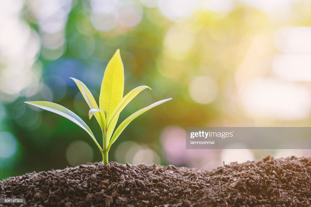 Plant growing from soil against blurred green natural background : Stock Photo