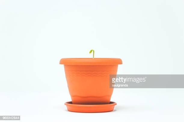 plant growing in a flower pot - flower pot stock pictures, royalty-free photos & images