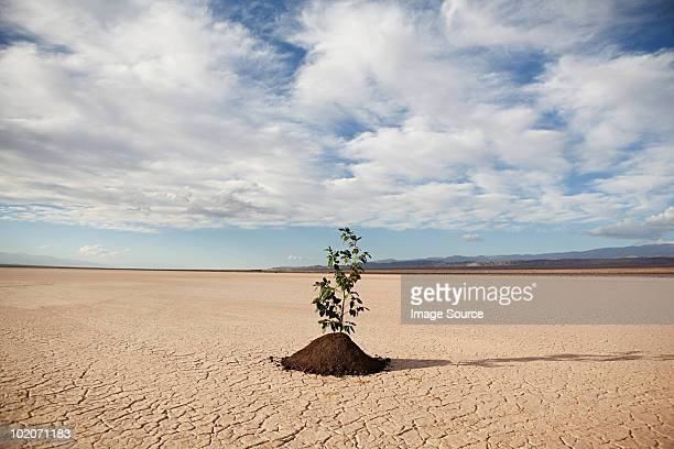 Plant growing in desert landscape