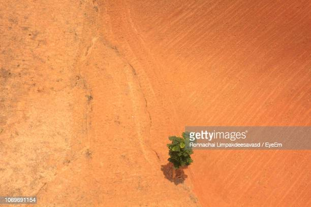 plant growing in desert - deforestation stock pictures, royalty-free photos & images
