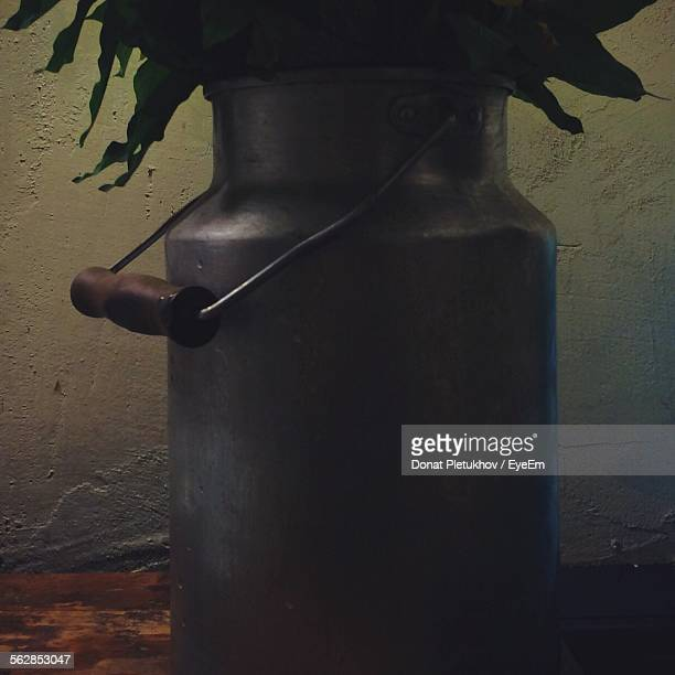 Plant Growing In Empty Milk Churn