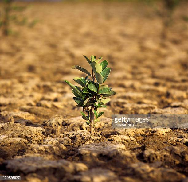 plant growing in the mud - fstoplight stock photos and pictures