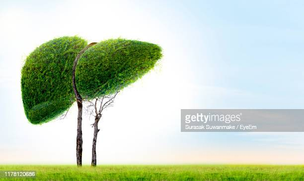 plant growing on field against sky - cirrhosis stock pictures, royalty-free photos & images