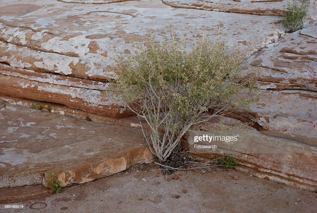 Plant growing on rock : Stock Photo