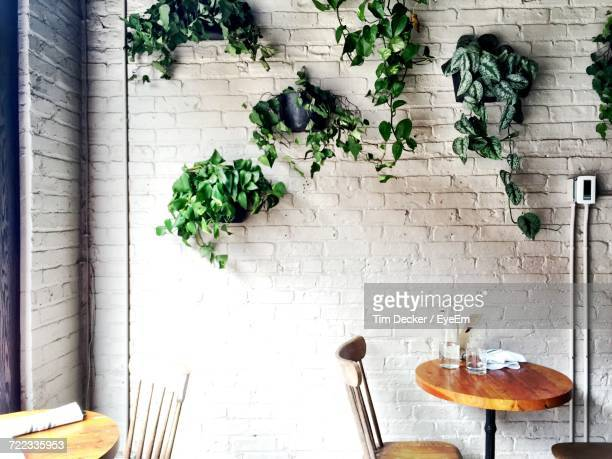 Plant Growing On Wall