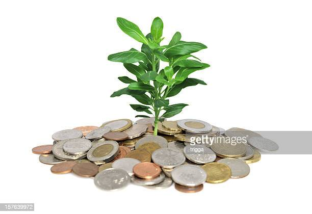 Plant growing out of coins - investment concept