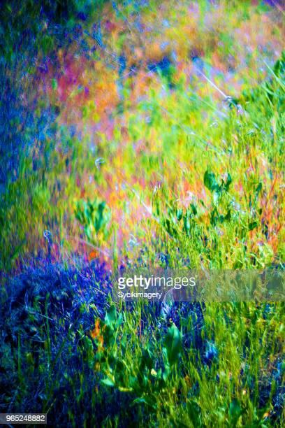 Plant growth, abstract color background