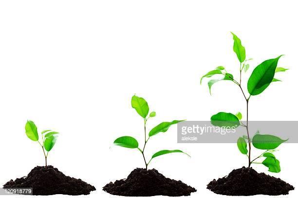 Plant Wachstum