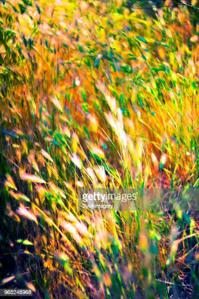 Plant growth, vibrant colored grass in field