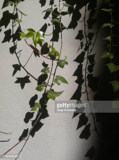 Plant hanging, light and shadows