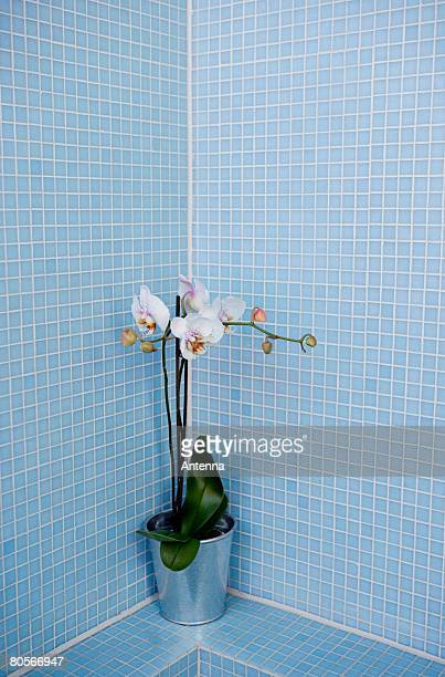 A plant in a blue tiled bathroom