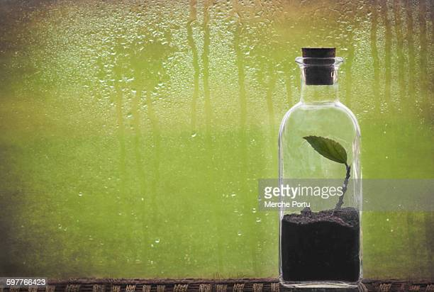 Plant in a bottle