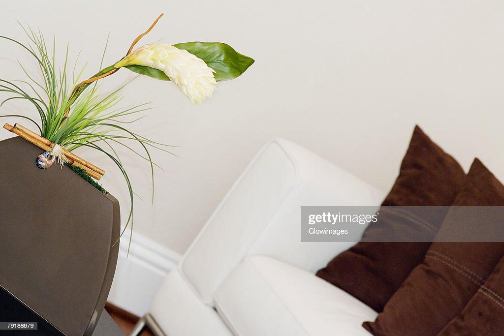 Plant in a vase : Foto de stock
