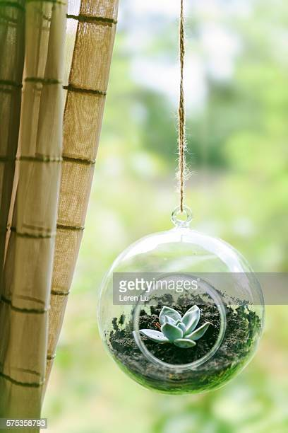 Plant in glass ball hanging on bamboo