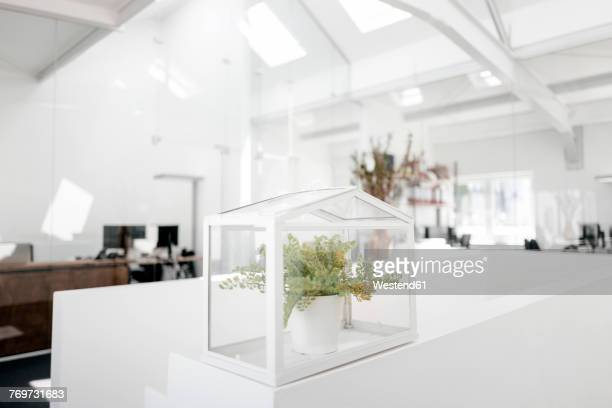 Plant in glass box on railing in office