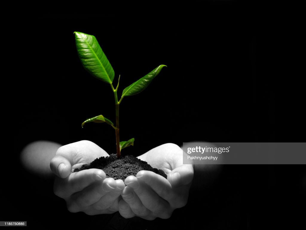plant in hands : Stock Photo