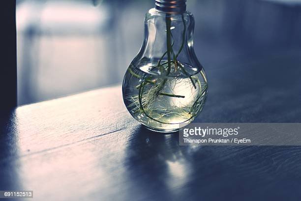 Plant In Light Bulb On Wooden Table