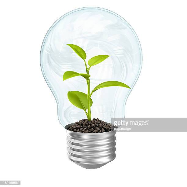 plant in lightbulb