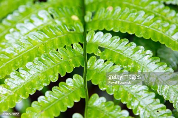 Plant in Tenorio Volcano National Park, Costa Rica
