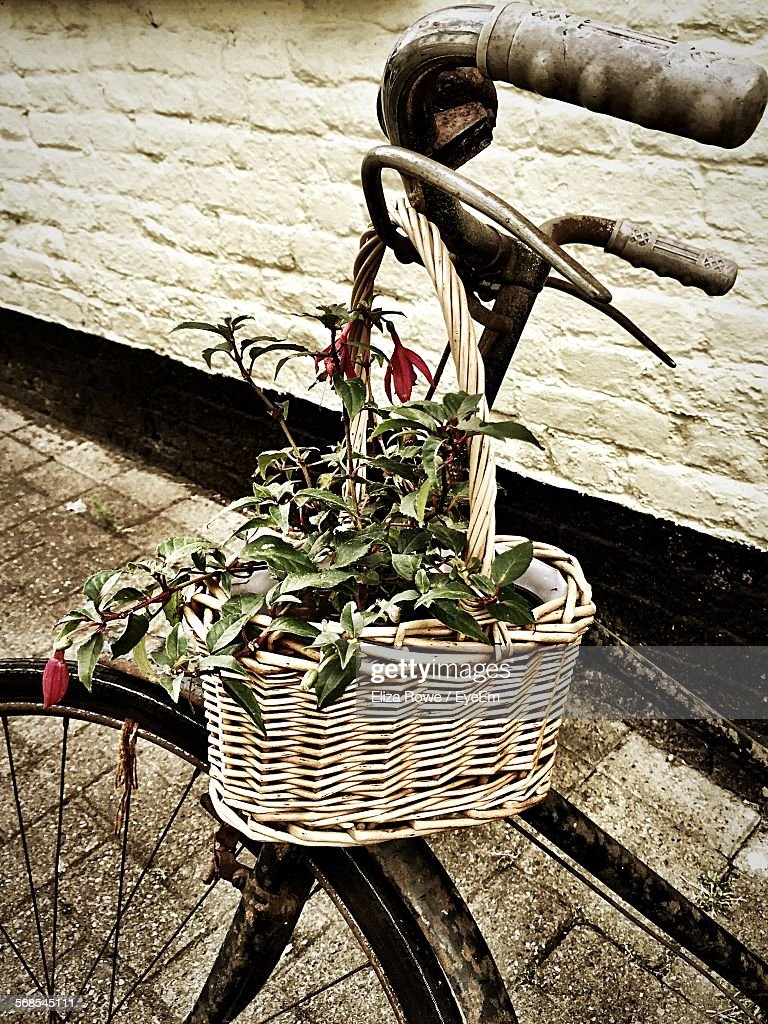 Plant In Wooden Basket Hanging On Bicycle Handle By Sidewalk : Stock Photo