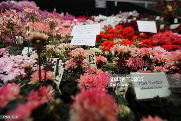A plant is reserved to be sold on the last day of the Chelsea Flower Show on May 23 2009 in London The Royal Horticultural Society flagship flower...