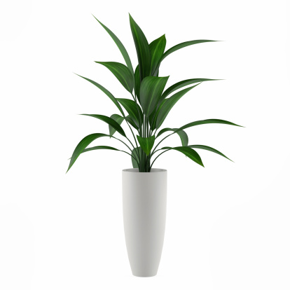 plant isolated in the pot 463123467