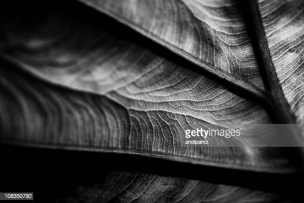 plant leaf detail - black and white nature stock pictures, royalty-free photos & images