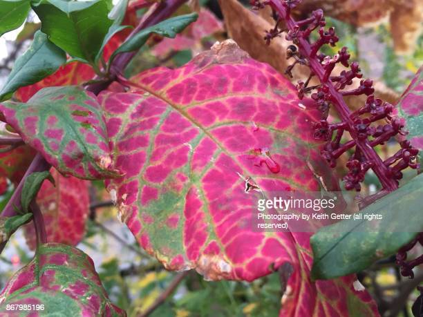 Plant leaves changing color and form in Autumn