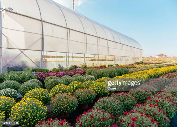 Plant nursery and greenhouse with potted plants and flowers