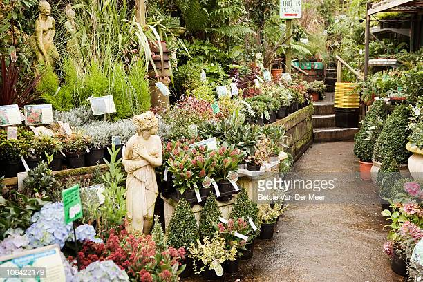 Plant nursery showing collection of plants.