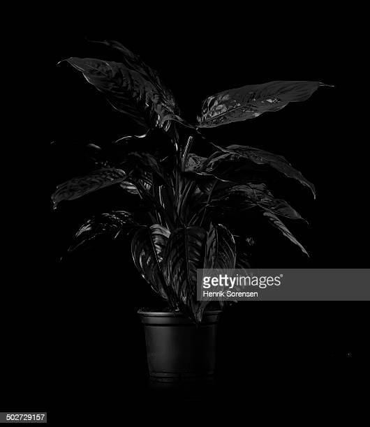 Plant on black backdrop