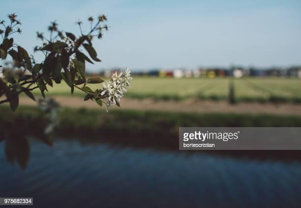 plant on field against sky - bortes stockfoto's en -beelden
