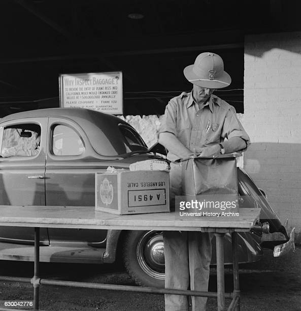 Plant Quarantine Inspector Examining Bags for Insect Pests, Arizona, USA, Dorothea Lange for Farm Security Administration, May 1937.