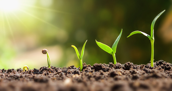 plant seeding growing step. concept agriculture 1094263056