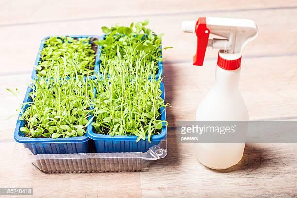 Plantez des plantes.