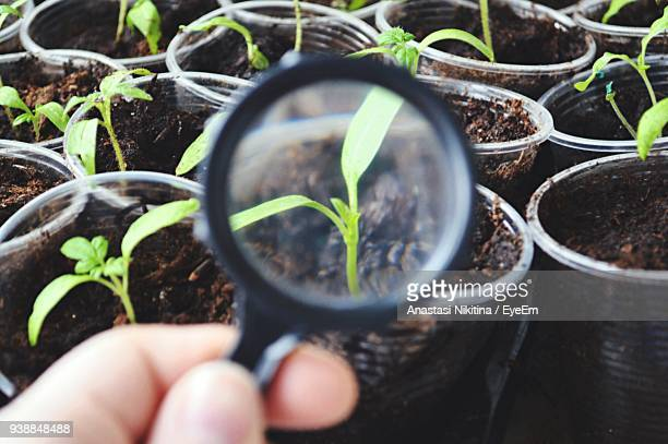 plant seen through magnifying glass - nikitina stock pictures, royalty-free photos & images
