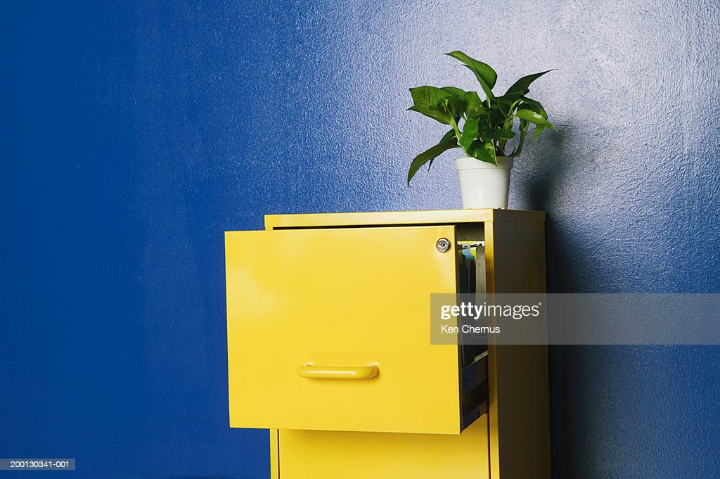 Plant sitting on top of open file cabinet : Stock Photo