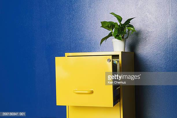 Plant sitting on top of open file cabinet