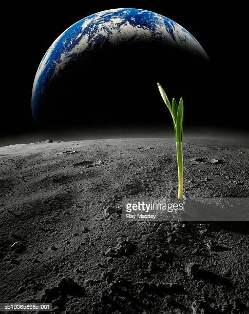 Plant sprout growing on moon, planet earth in background
