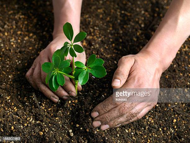 plant sprout - sapling stock photos and pictures