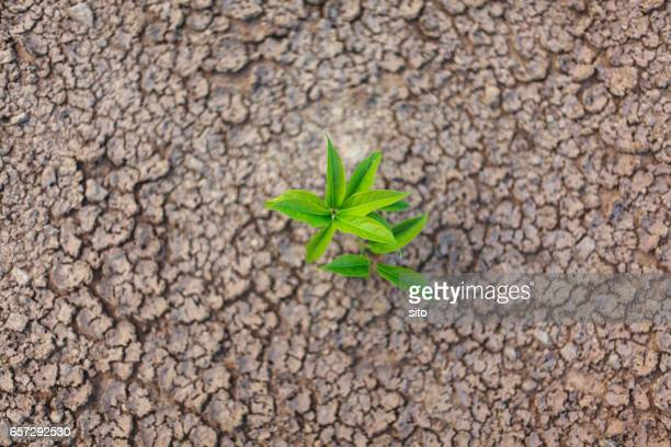 a plant sprouting on arid land, thakhek, laos - climate stock pictures, royalty-free photos & images