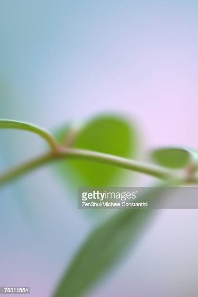 Plant stem and leaves, abstract view