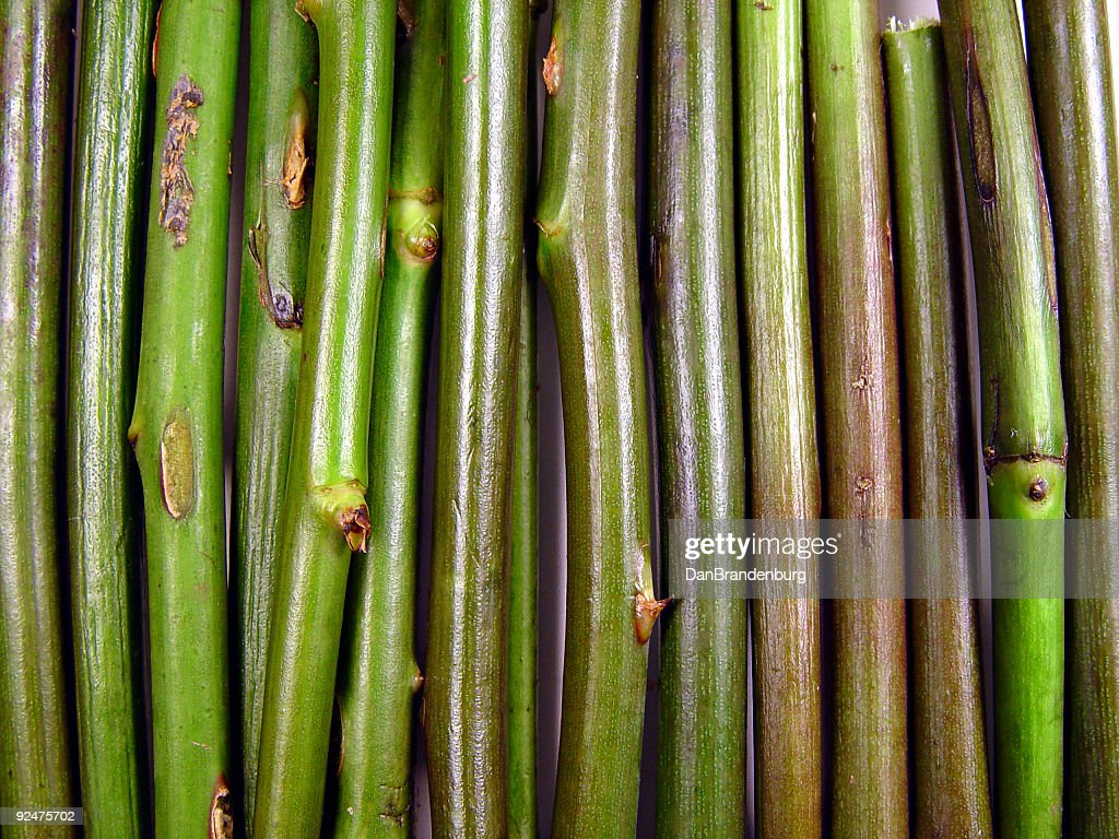 Plant Stem Texture High Res Stock Photo Getty Images
