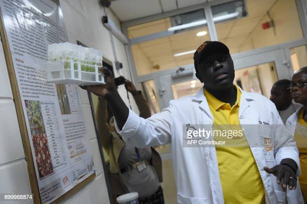 Plant Tissue Culture and Conservation Specialist Badara Gueye speaks about germs and storage of cassava seeds at the International Institute of...