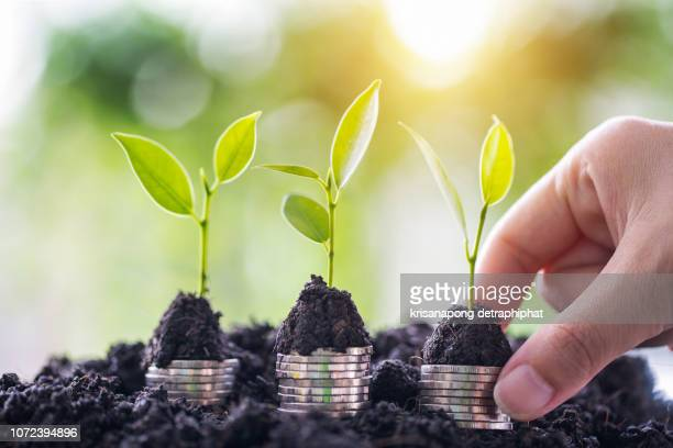 plant tree growing on business woman hand.business investment financial growth concept ideas - milieukwesties stockfoto's en -beelden