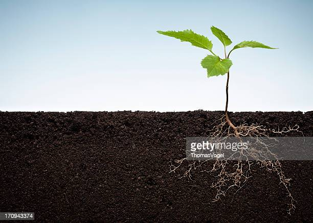 plant with exposed roots - underground stock photos and pictures
